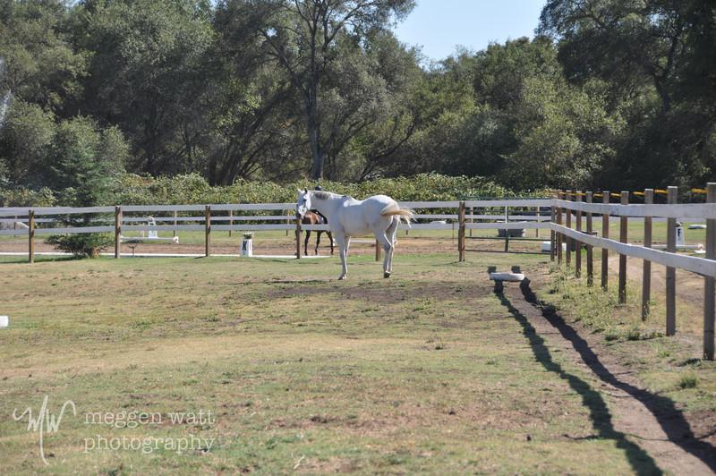 EB&Horses-076.jpg