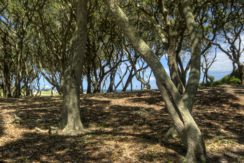 Beautiful shaded area under a large grove of coastal trees on the beach at the Fort Fisher State Recreation Area on the southern tip of Pleasure Island in Kure Beach, NC on Saturday, July 12, 2014. Copyright 2014 Jason Barnette
