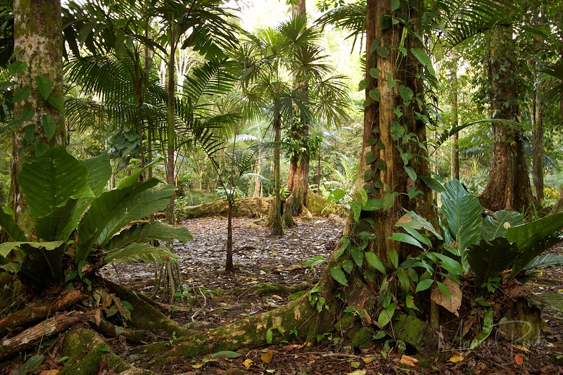 Palm garden in the jungle