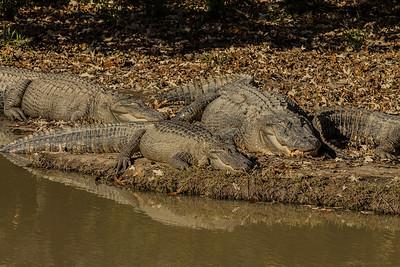 11-14-13 East Texas Gator Farm