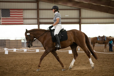 Horse 8