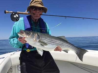 Cape Cod  Striper fishing 2016