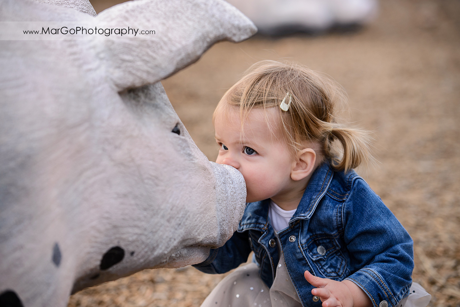 close-up of little girl in white dress and jeans jacket kissing snout of a black and white pig during family session at San Jose Martial Cottle Park