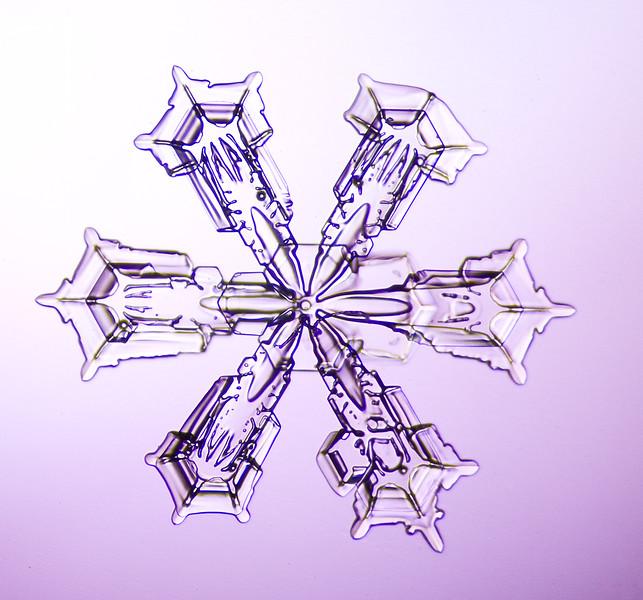 Snowflake-0687-Edit.jpg