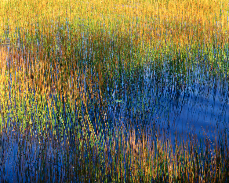 Reeds, Wind and Water I