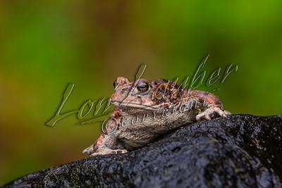 46501 Reptiles, amphibians