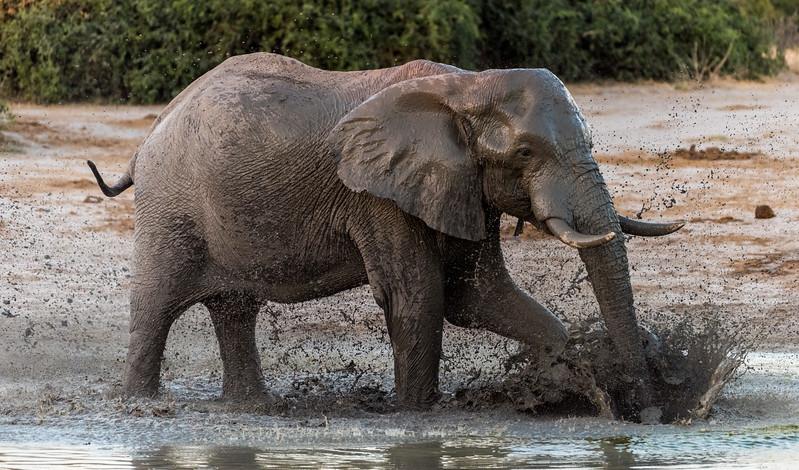 Botswana_June_2017 (4244 of 6179).jpg