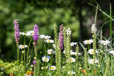 (Mostly) Garden Buttlerflies