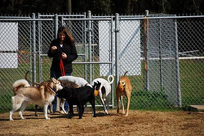 Daphne Dog Park 24FEB08