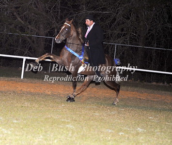 CLASS 39  WALKING HORSE CHAMPIONSHIP