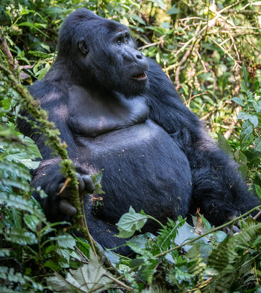 Uganda_T_Gor-369.jpg
