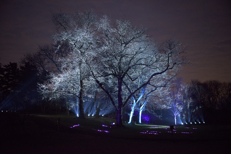 Illumination at the Morton Arboretum