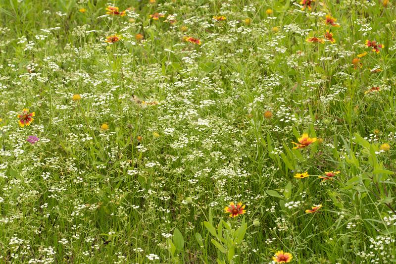 Prairie View 2 May 2020-04900.jpg