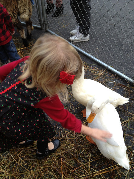 She loved the pet-a-ble ducks.  We decided that they the animals had all had a heavy dose of Benadril.