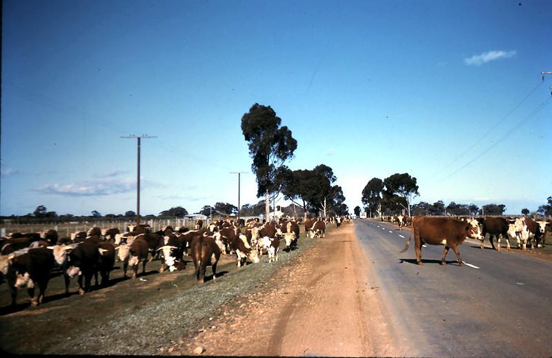 1961-8-24 (28) Between Echuca & Tongala.JPG