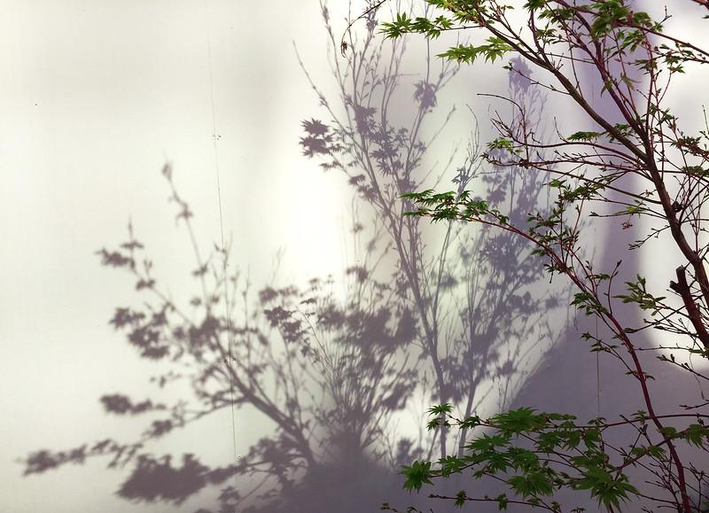 shadow leaves.jpg