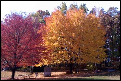 Fall colors in my yard!