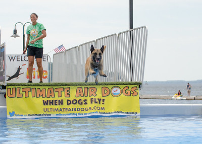 Ultimate Air Dogs