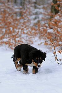 Hundespaziergang 09.02.2013