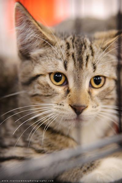 20110611 PetSmart Adoption Event-5.jpg