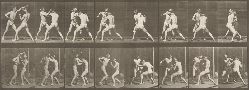 Two men in pelvis clothes boxing (Animal Locomotion, 1887, plate 342)