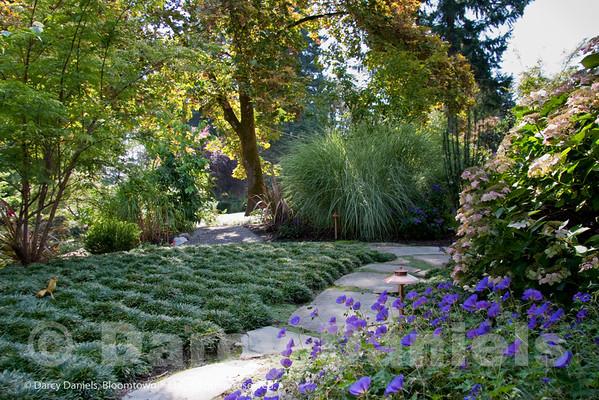 Woodland Garden with Foliage Focus