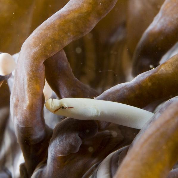 pipefish mushroom coral (1).jpg