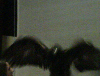2009-02-21 Raptors