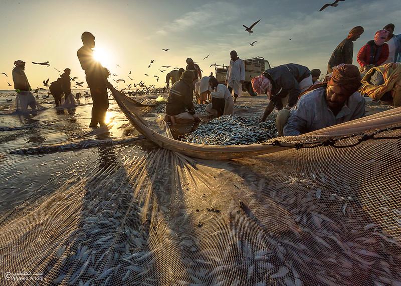 Sardine Season (45)- Dhofar.jpg