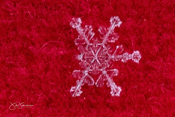 snowflakes-2449.jpg