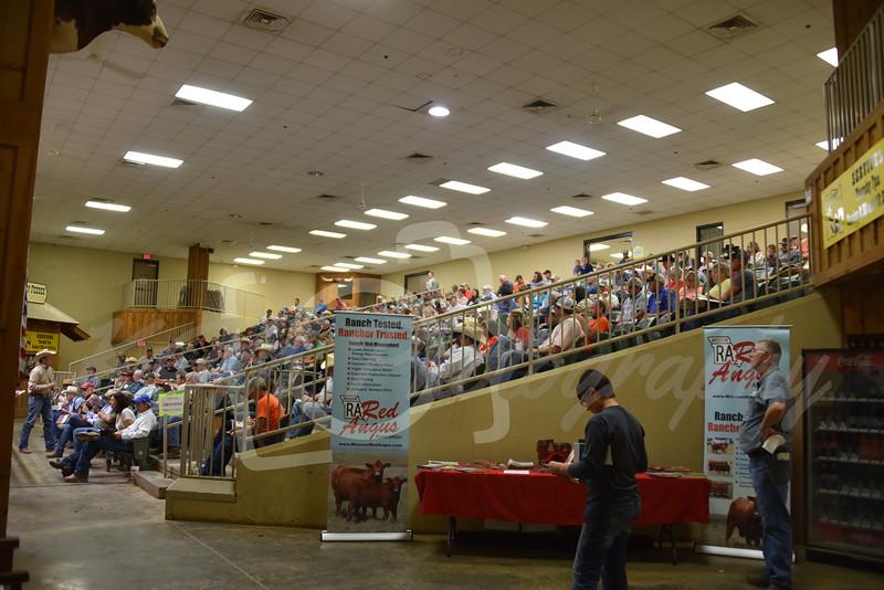 2017 Ozark Red Roundup Sale