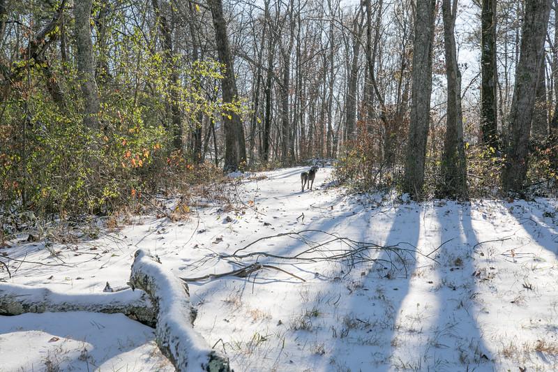 January Snow-21.jpg