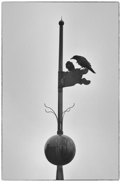 Krähen  tiff-jpg