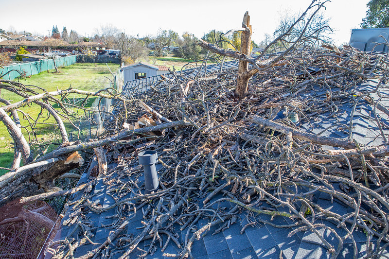 5671 Wallace Ave - Tree 1030am 12 16 2017 Extremly Windy Conditions-65.jpg