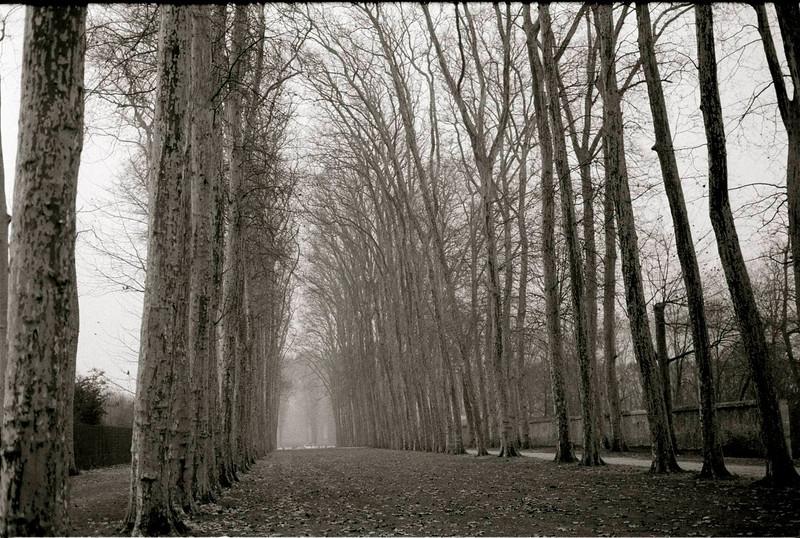 versaille trees 2.jpg