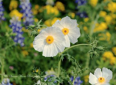 Spring Wildflowers 2012