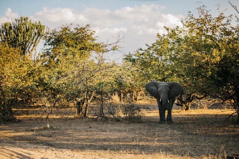 2019_06_24_Global_Malawi_ASJ_D01_Safari-29.jpg