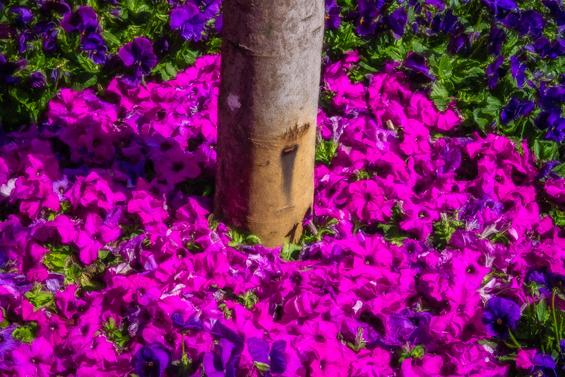 October 5 - Flowers, leaves and a tree.jpg