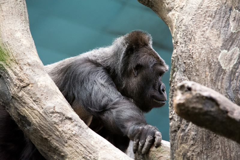 Brookfield Zoo - First Visit 2014