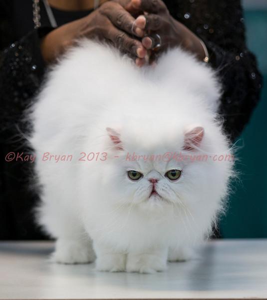CatShow2014061_1.jpg