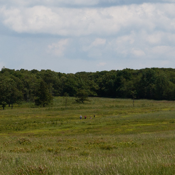 Big Meadow Panorama