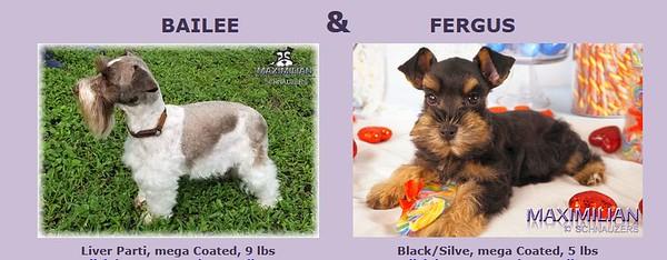 Bailee & Fergus Pupppies, DOB 6/01/2021