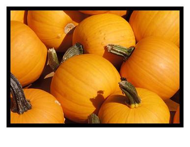Pumpkins & Gords