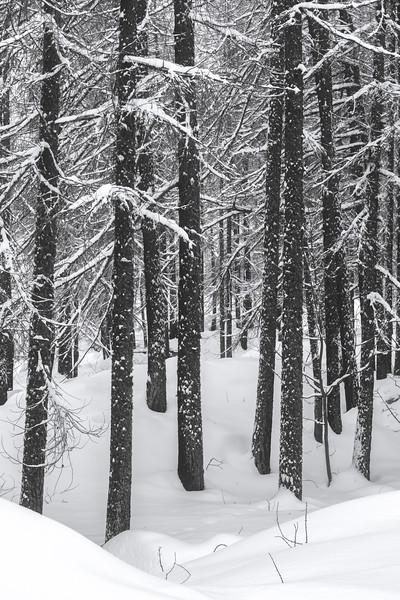 White Winter II
