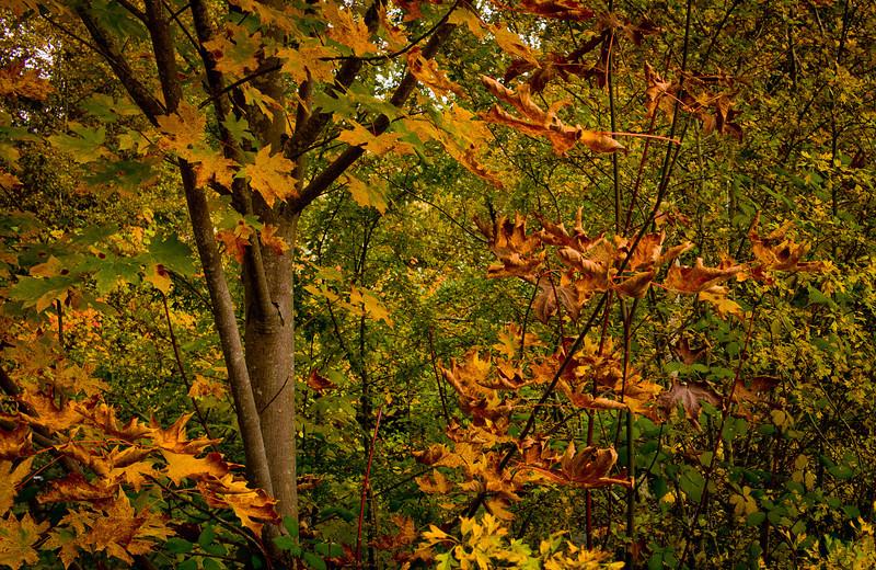 2011-10-23-Bothell-Fall