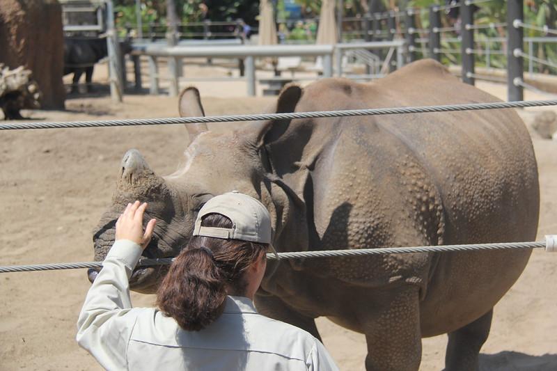 20170807-065 - San Diego Zoo - Rhinoceros.JPG