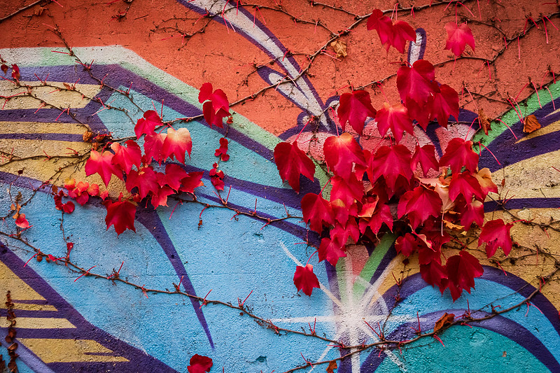 Red Leaves on Blue and Orange