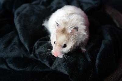 Carla Pug & Hamster Originals