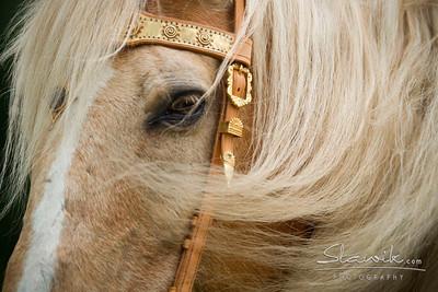 Favorite Equine Pics