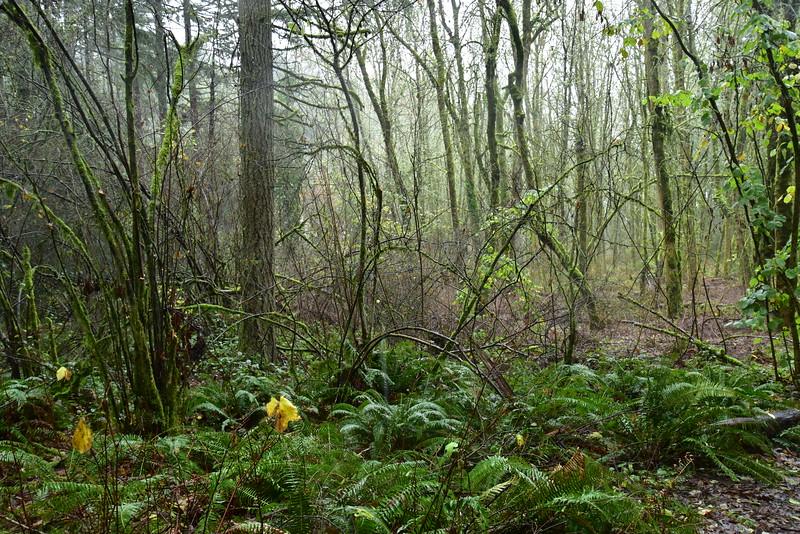 Portland Jungle